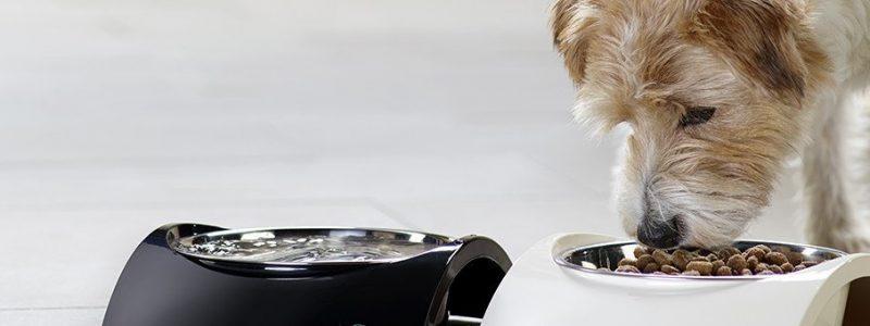 Croquette chien : la sélection Maxi Zoo